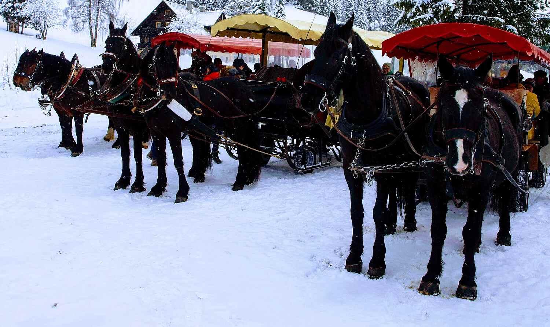 Mit Kutschen und Noriker Pferden auf die Alm.