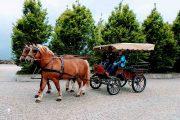 Pferdekutschen und Kutschenfahrten für ihre Incentives in Oberbayern und Salzburg