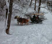 Pferdekutschen und Kutschenfahrten